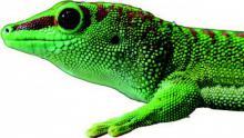 Gecko-Sohlen abgeguckt